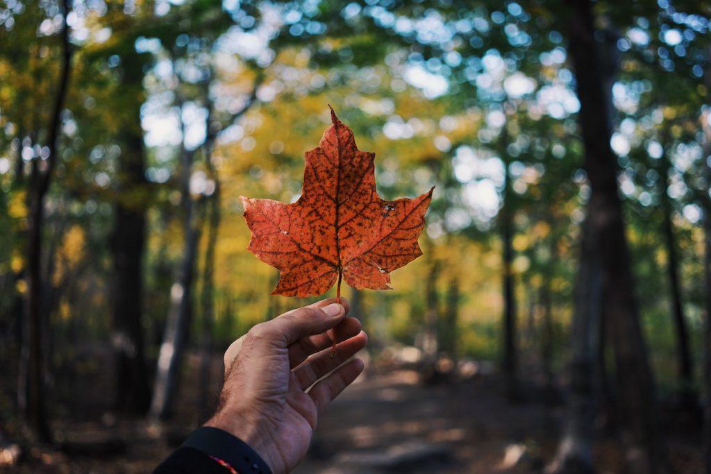 【カナダ永住権への道】コロナ禍でCoPRインタビューやランディングが簡単になった話【何もない】